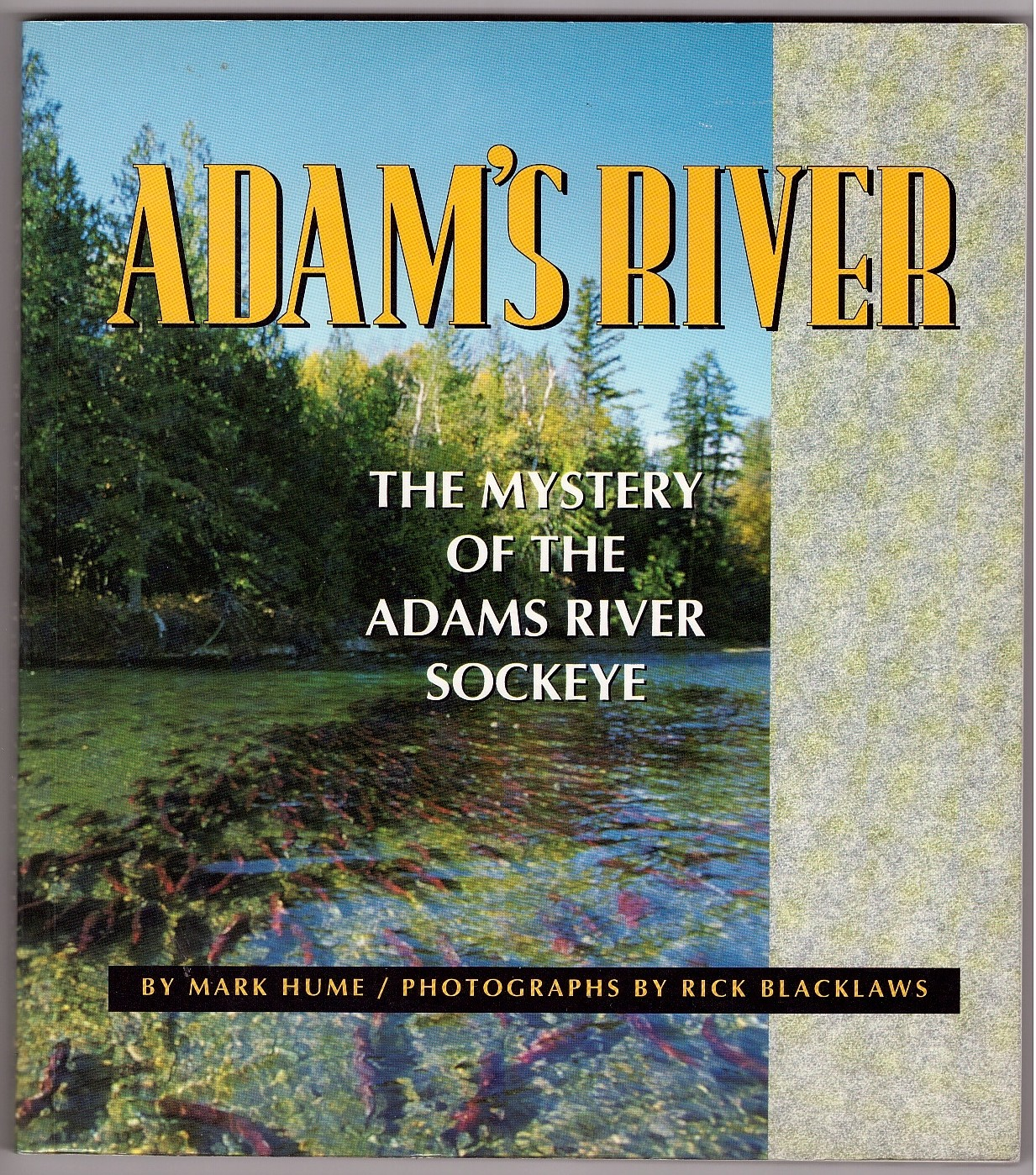 Image for Adam's River  Exploring the Mystery of the Adams River Sockeye