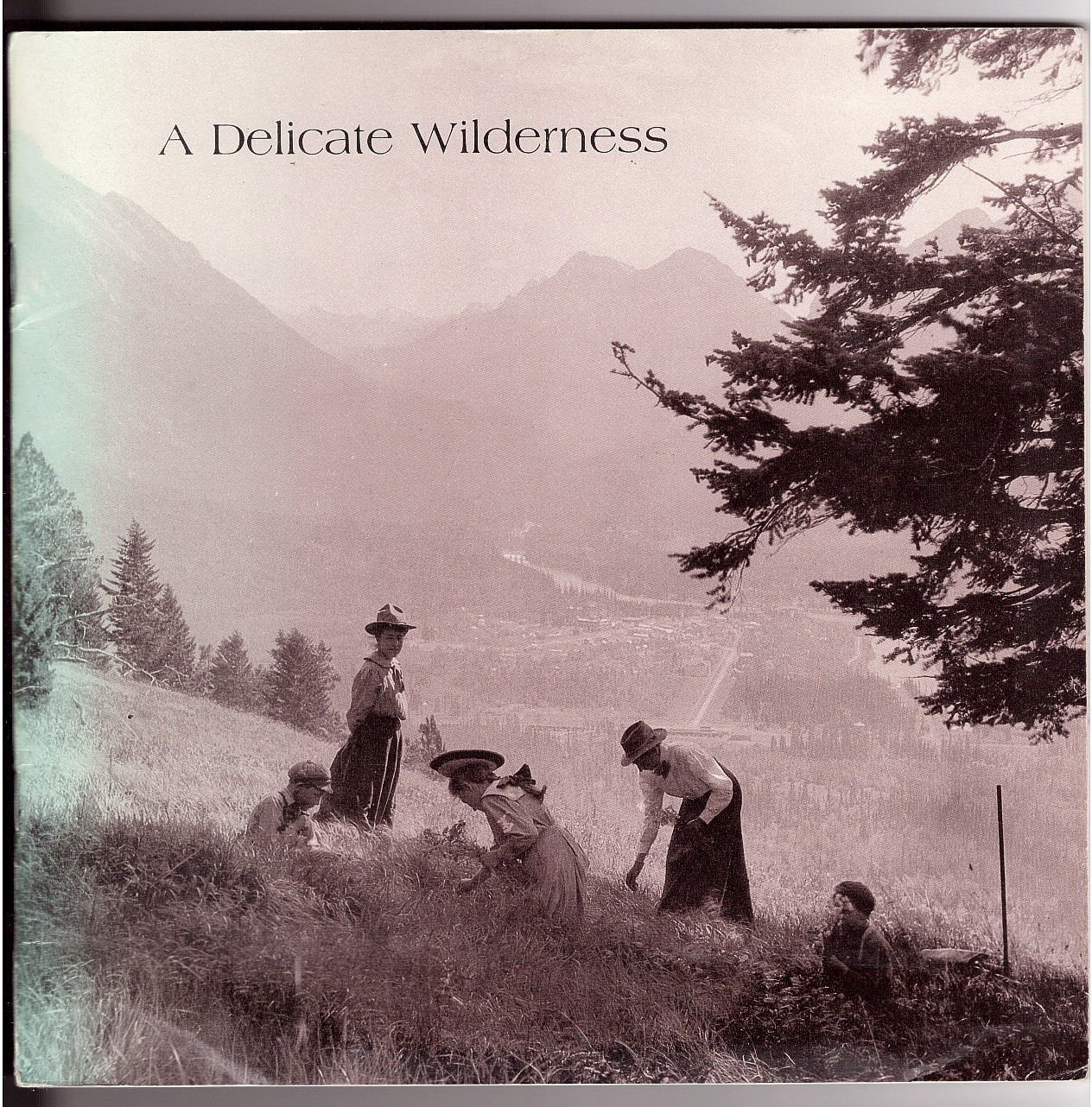 Image for A Delicate Wilderness; The Photography of Elliott Barnes 1905-1913